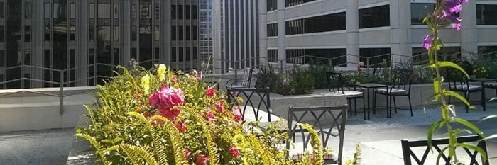 343 sansome rooftop deck