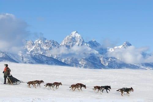 Iditarod Trail - Alaska