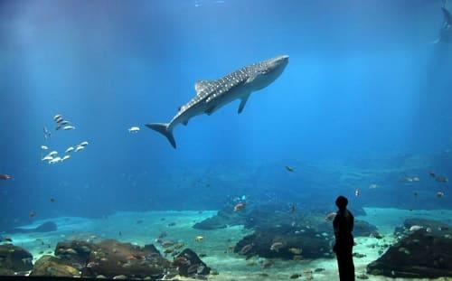 Aquarium de Géorgie - Atlanta
