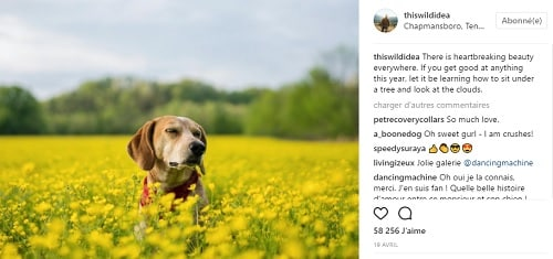 Road trip avec son chien