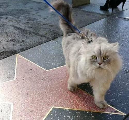 Gandalf à Los Angeles