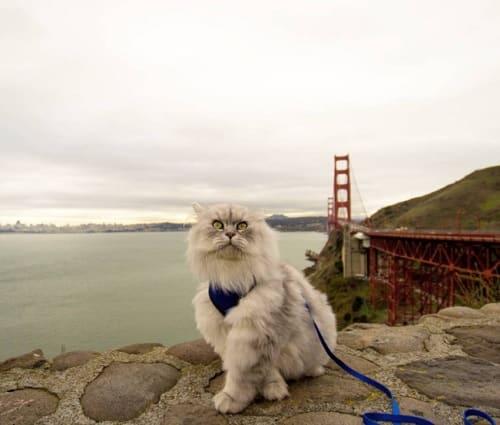 Gandalf à San Francisco