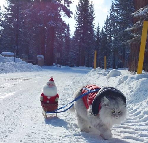 Gandalf dans la neige
