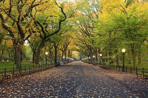 Central-Park - New-York